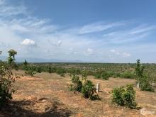 4000m2 đất trồng cây xã Bình Tân, gần đường quốc lộ