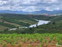 Đất Vườn Thổ Cư Bảo Lộc Giá Rẻ, Gần Kiwuki, Mặt Tiền Đường