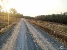 Bán gấp lô đất sổ sẵn hơn 300m2 phường chánh phú hòa