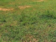 Bán 10,000m2 đất trồng cây hoà thắng gần đường nhựa ĐT 716 1,3 tỷ Lh 0938677909