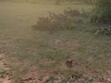 Bán 2 lô đất nông nghiệp hoà thắng gần ĐT 716, bàu trắng từ 130k/m Lh 0938677909