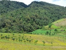 DT 10ha đất nương rẫy, có trang trại nuôi bò. Có 2ha trồng xoài, điện nước đầy đ