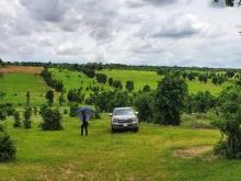 Ưu đãi tháng 9 cho khách đầu tư đất vườn bình thuận chỉ 1,18 tỷ/ha Lh 0938677909