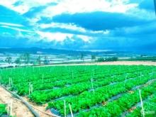 Đất nền nghỉ dưỡng view đồi núi cực đẹp, giá chỉ từ 4xx Lâm Đồng