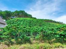 Đất nền nghỉ dưỡng ven Đà Lạt tại thị trấn Đinh Văn, Lâm HÀ