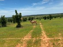 Bán lô đất nông nghiệp sổ đỏ sẵn, vuông vức, cách liên huyện chỉ 270m