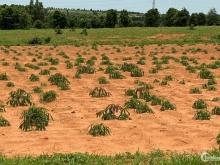 Ưu đãi tháng 9 đầu tư đất vườn hồng thái gần liên huyện 820tr/ha Lh 0385.230667