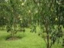 Bán đất nông nghiệp giá tốt huyện Nhà bè, TPHCM