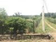 Bán 1000m2 Đất 2 Mặt Tiền Tại Túc Trưng Định Quán Giá 1,5tr/m2