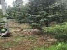 Cần bán gấp 2,7 mẫu đất sầu riêng đang thu , Xã Phú Xuân, Tân Phú, Đồng Nai