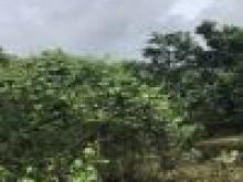 Dịch kẹt tiền bán rẻ 2000m2 có 100 thổ cư Xã Phú Thịnh, Tân Phú, Đồng Nai