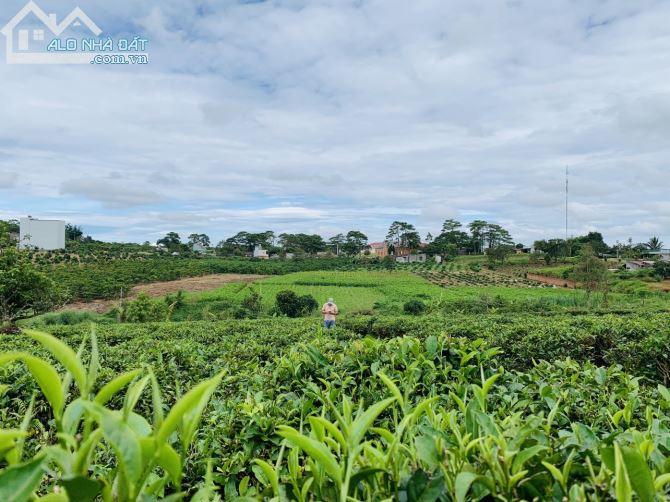 Bán đất thổ cư Lý Thái Tổ 14x25m gần Lâu Đài Trắng.